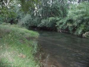 Río en calma
